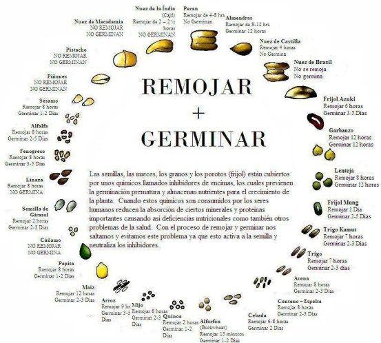 ¿Cómo hacer germinar a las semillas? - La Huertina De Toni