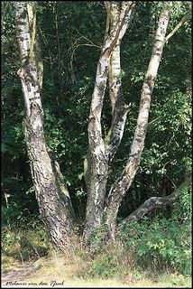 De Keltische Boomhoroscoop: welke boom past bij jou? - Spiritueelinfo.nl