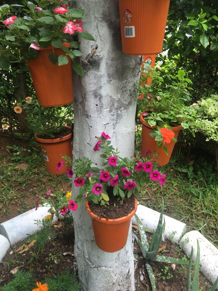 Maceteros de flores