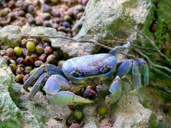 Nouvel article depuis le site littéraire Plume de Poète - Haïku des Crabes ( (俳句, haiku) .........jeanine Chatelain