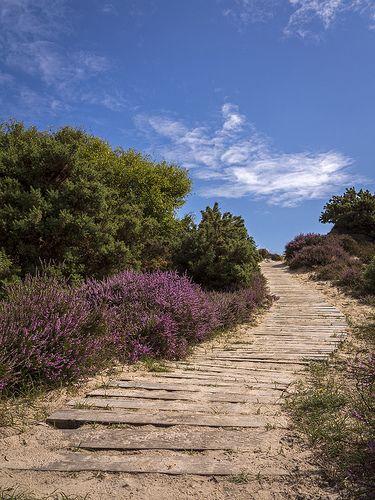 To the Beach…Studland, England Discover Purbeck