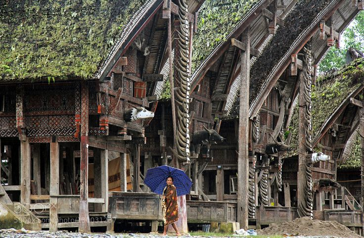 Toraja houses Remarkable toraja wooden architecture in the small village of Palawa located near Rantepao (Island of Sulawesi Indonesia).