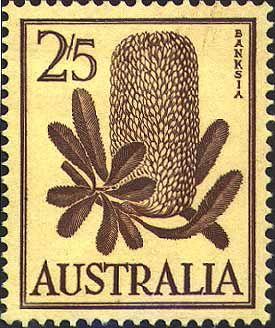 1960 vintage stamp of Banksia serrata by Margaret Stones #Australianflowers