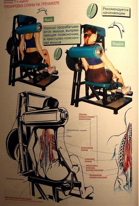 Атлетическая гимнастика - упражнения на мышцы спины 6