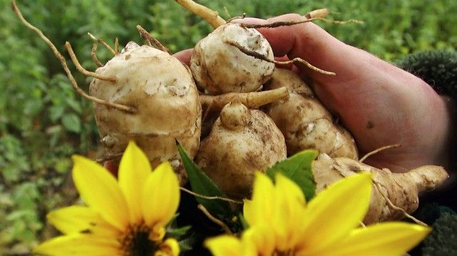 Zelenina, ktorá lieči diabetes, psoriázu, a ďalšie!