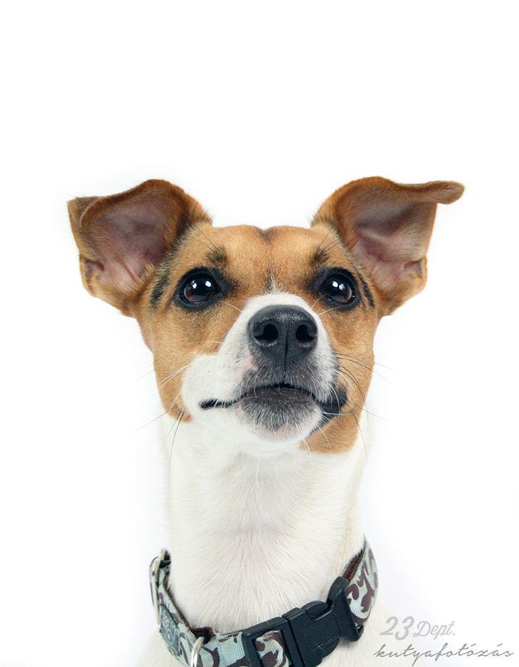Kutyafotózás