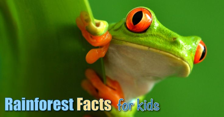 Rainforest facts for kids. Learn all about rainforests, including what they are, where they are located, types of forest, animals, tribes & much, much more.