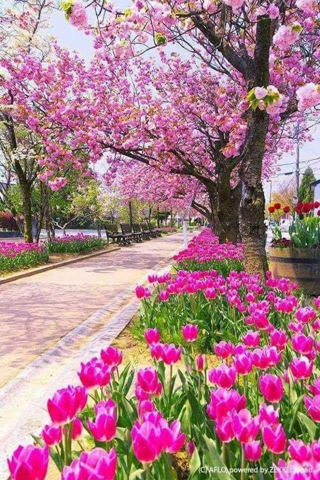 Bir yeşil yaprak Bir telli böcek Yeşeren tohum Güneşte görsem Sevinç doldurur içime Bir günü Güzel bir günü Güneşli bir günü Hiçbir şeye değişmem🌷🌼🌷🌼🌷🌼 ..... Necati Cumalı