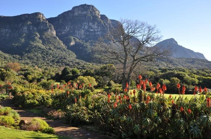 Kirstenbosch Botanical Gardens #SouthAfrica