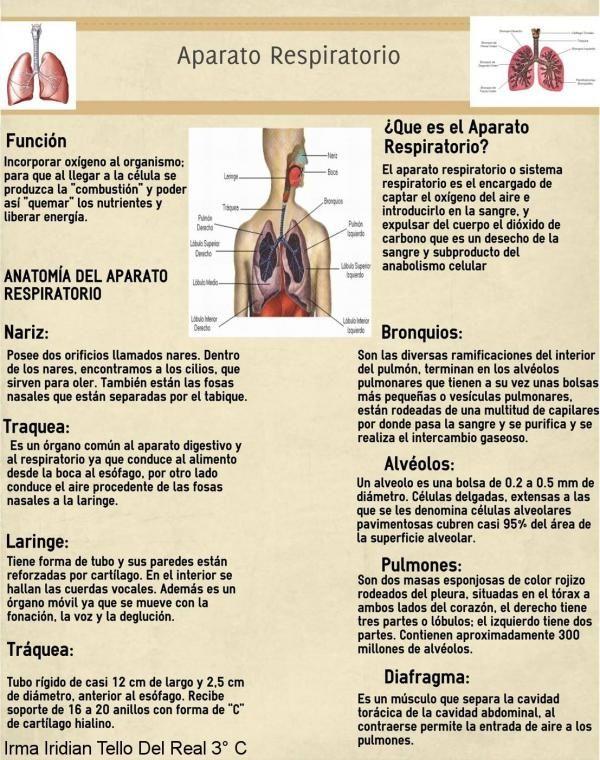 "Infografia No.6 APARATO RESPIRATORIO - IRMA IRIDIAN TELLO DEL REAL 3° ""C"""