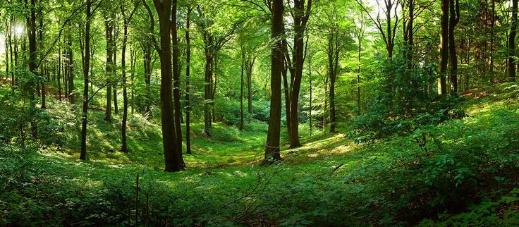 Image: Study shows that surrounding yourself with trees markedly reduces psychological stress