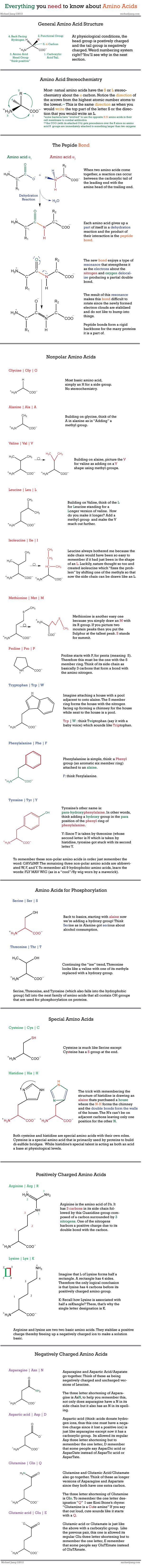 Amino Acids. Biochem grade, you can thank me next semester.