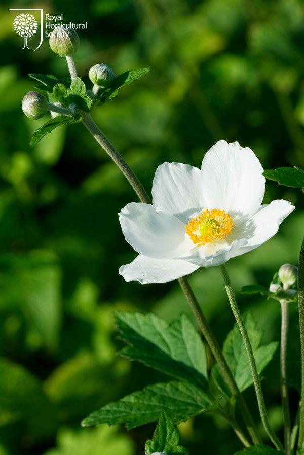38 Glorious Japanese Garden Ideas: Royal Horticultural Society (RHS)