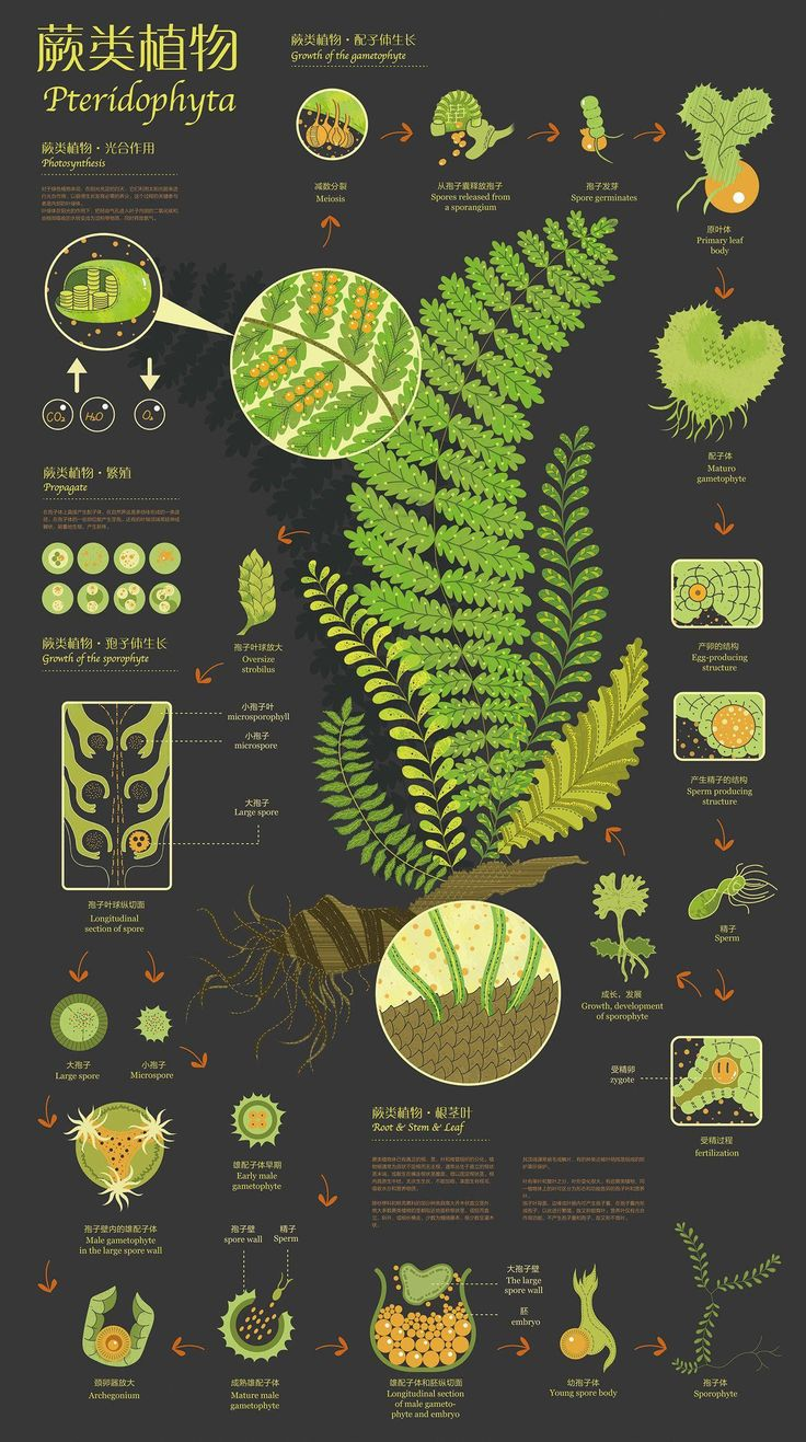 75 Truly Creative and Brilliant Infographic Design Examples Get inspired by thes… – Designer.ca