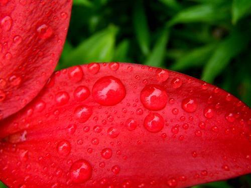 red & rain