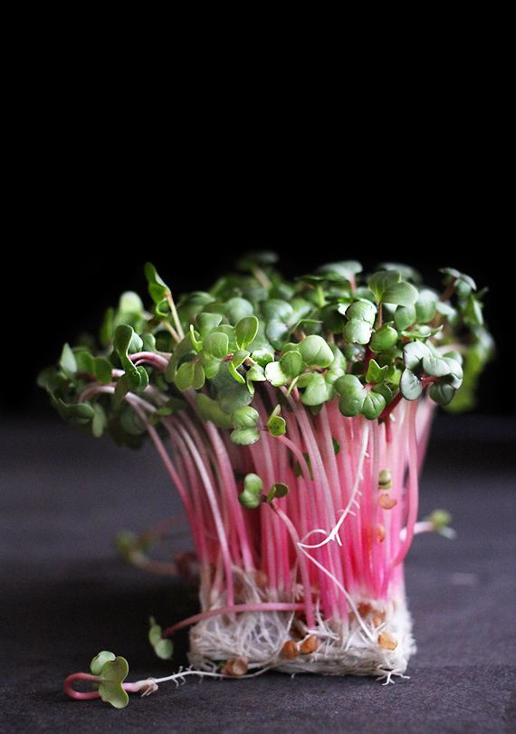 pinterest.com/fra411 #food #art