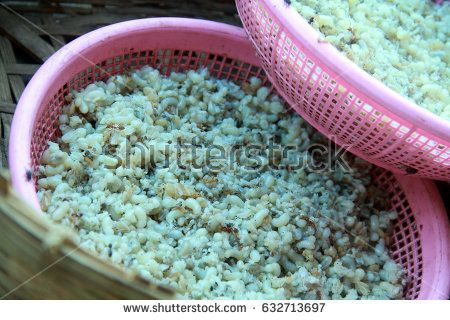 ant's eggs, eggs of red ant, weird food concept, traditional food of Laos people, morning market, Champasak, Laos