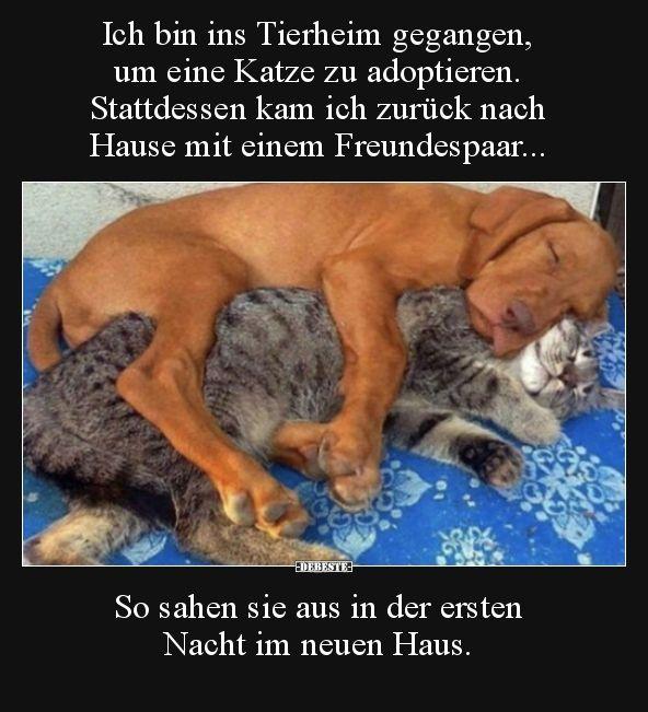 Ich bin ins Tierheim gegangen, um eine Katze zu.. | Lustige Bilder, Sprüche, Witze, echt lustig – Tatjana Müller