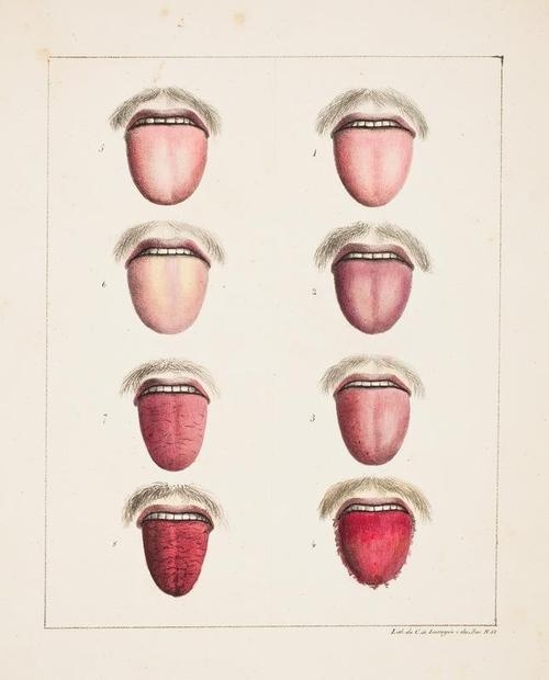 Tongues and mustaches. Scientific illustration 19th century