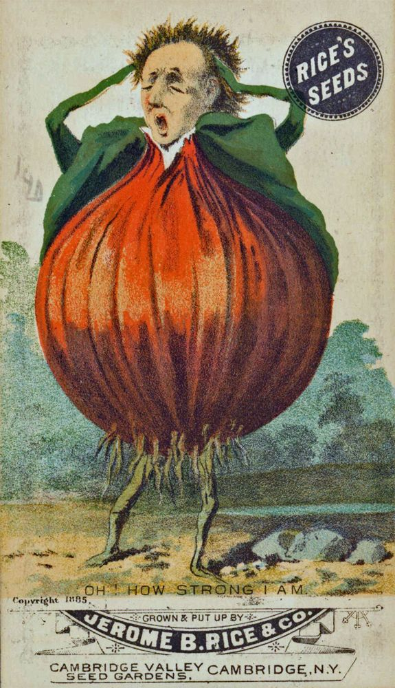 """""""Oh how strong I am"""" - onion seeds from Rice's Seeds. 1885. Looks like a body builder pose"""