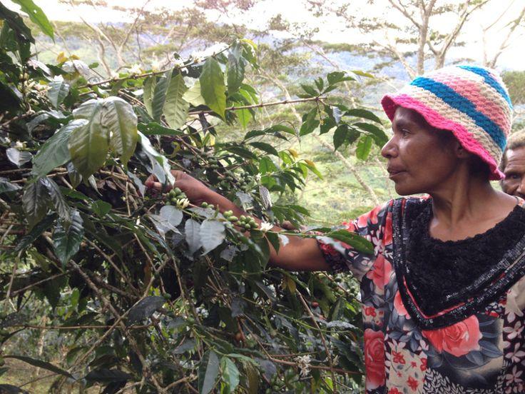 Kopi Desa pelebip, pegunungan Bintang papua