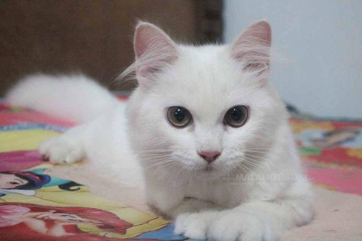 Awas, Kucing Gampang Terserang Penyakit Saat Kemarau