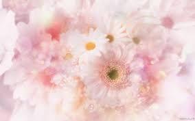 Картинки по запросу белые цветы