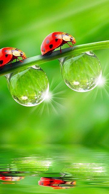 Käfer und Pflanzen im Morgentau - ein wunderschönes Motiv für ein Postkartenmailing, um dem Empfänger ein paar Glückwünsche zu übersenden Raindrops