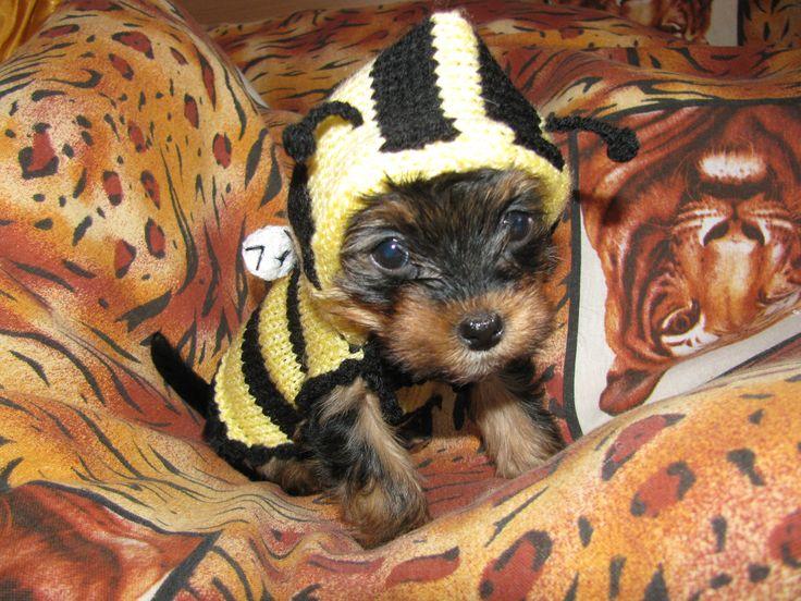 Knitted dog sweater Bee dog jumper puppy sweater by annastoikova, $15.00