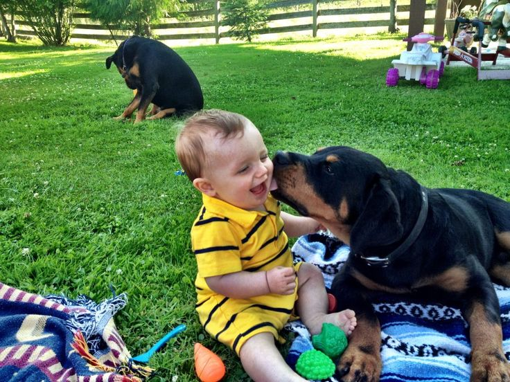 Baby and Rottweiler puppy. i grew up with a rottweiler...hopefully my kid can too :)