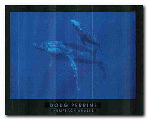 Humpback Whale Ocean Animal Wall Décor Art Print Poster (... https://www.amazon.com/dp/B01LZ224N9/ref=cm_sw_r_pi_dp_x_2mn9xbXN38X1C