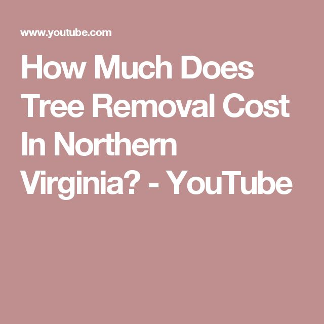 How Much Does Tree Removal Cost In Northern Virginia? - YouTube #treeremoval #trees #costoftreeremoval #treeremovalcost #northernva #dc #fairfaxcounty #dctrees
