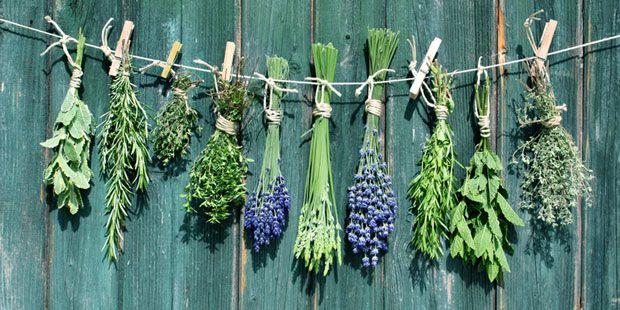 In vielen unscheinbaren Pflanzen steckt großes Heilpotenzial. Erfahren Sie hier, wie Homöopathie Cholesterin senken und weitere Krankheiten lindern kann.