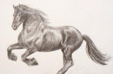 Как нарисовать лошадь поэтапно, фото и видео для начинающих. Рисуем лошадь карандашом поэтапно и легко