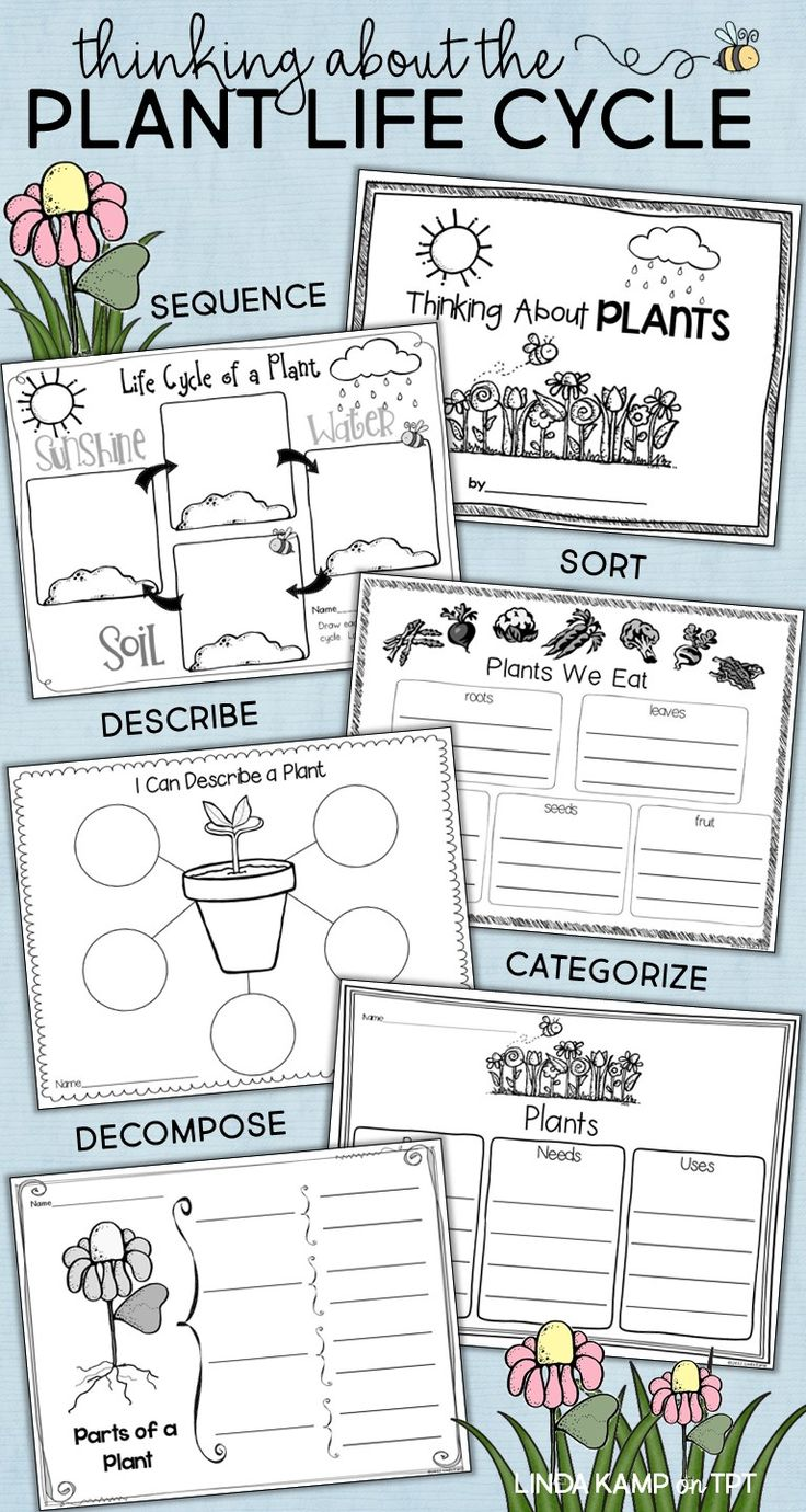 Life cycle various stages of development from an embryo to - Help Your Students Develop Critical Thinking Skills Add These Graphic Organizers To Your Plant Life