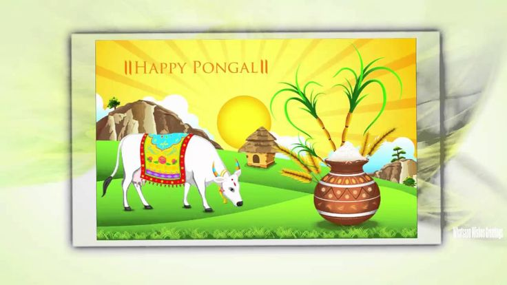 Happy pongal 2016 Whatsapp Video | Happy pongal 2016 Latest Wishes/Greet...
