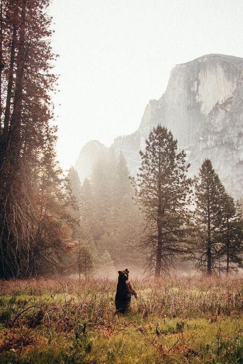 lsleofskye:Yosemite National Park http://ift.tt/2h4fD7v