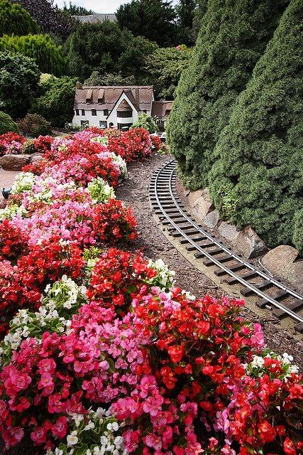 Image result for train tracks flowers