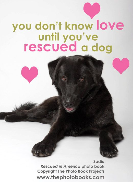 """""""You don't know love until you've rescued a dog."""" There are so many adoptable animals looking for a loving home. Next time you're thinking about a new pet, stop by the shelters or humane societies in your area to give a furry friend their forever family. --- The Humane Society of Fremont County Adoption Center is located in Canon City, CO. http://www.canoncityhumanesociety.org/"""