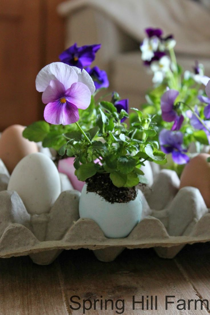 Colour eggs, then crack the yoke out and fill with flowers for a pretty Easter display.