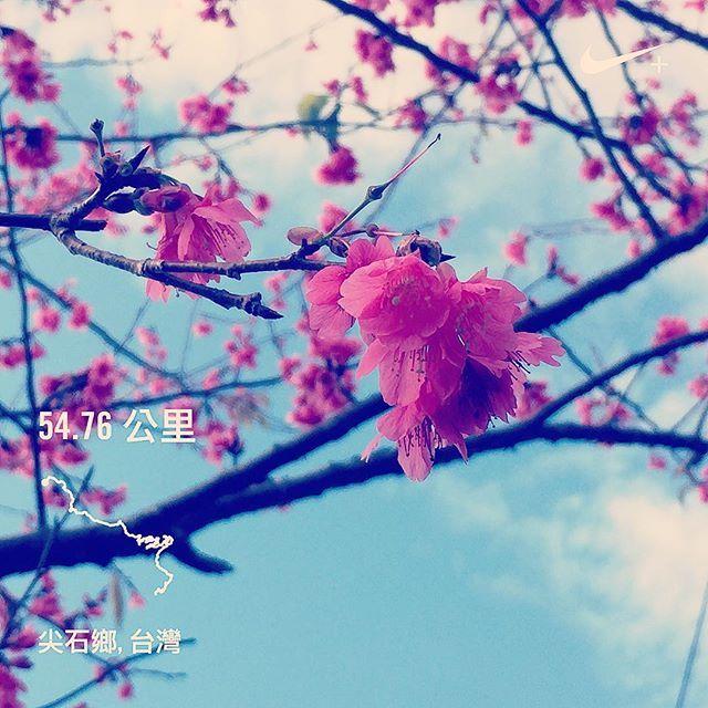 【mangofang99】さんのInstagramをピンしています。 《花都開好了。謝謝陪我完賽的朋友們,尤其 @lailai416 。這麼美的地方,還是來悠哉賞景就好😂 #2017鎮西堡祖靈之鑰超級馬拉松 #見祖先了我 #跑得我不要不要 #running #ランニング #ランニング女子 #さくら #桜 #花見 #台湾 #Taiwan #尖石鄉 #秀巒村 #supermarathon》