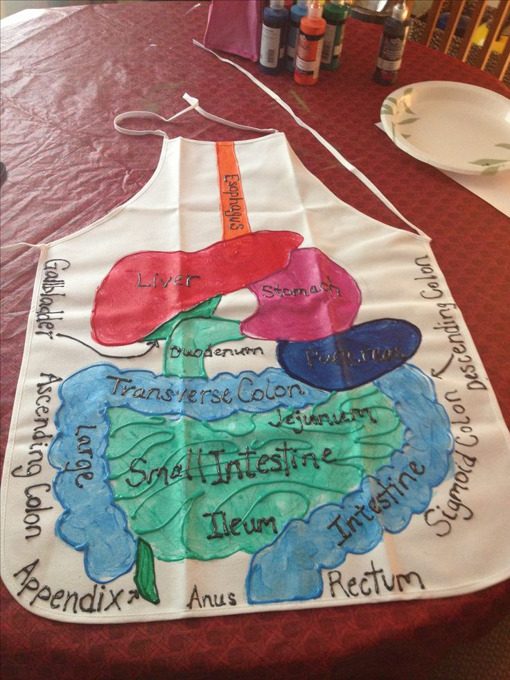 Human biology project- students use an apron to diagram the internal body systems #humanbio #visualaid #authenticassessment