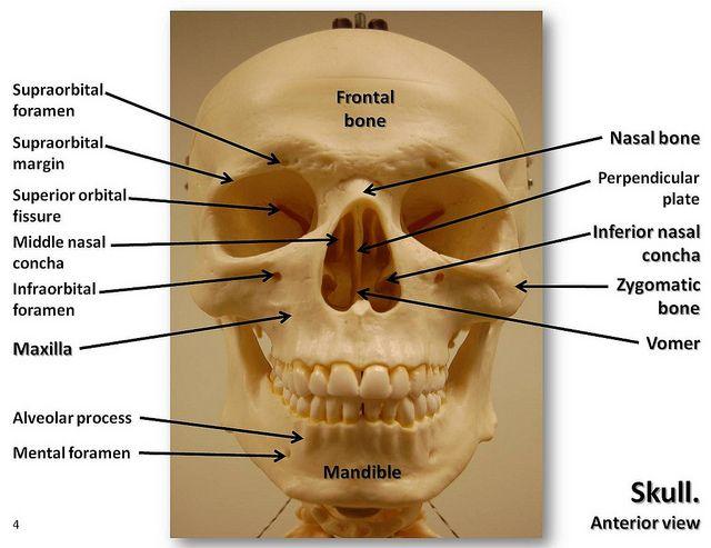 9 Best Ap Images On Pinterest Anatomy Med School And Bones