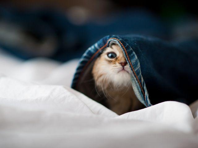 صور قطط جميلة عالية الجودة Hd