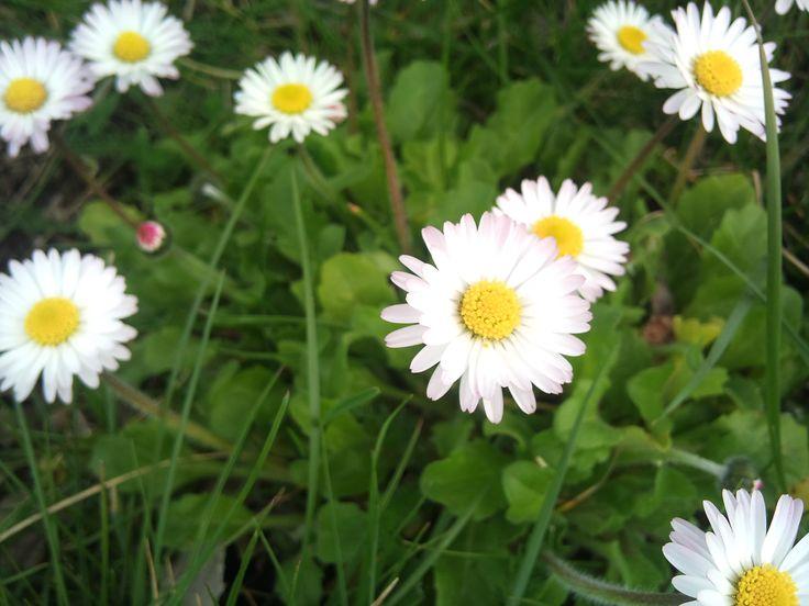 Deco Automne Romantique Bruyere Erica : Id� es sur le thème fleurs sauvages