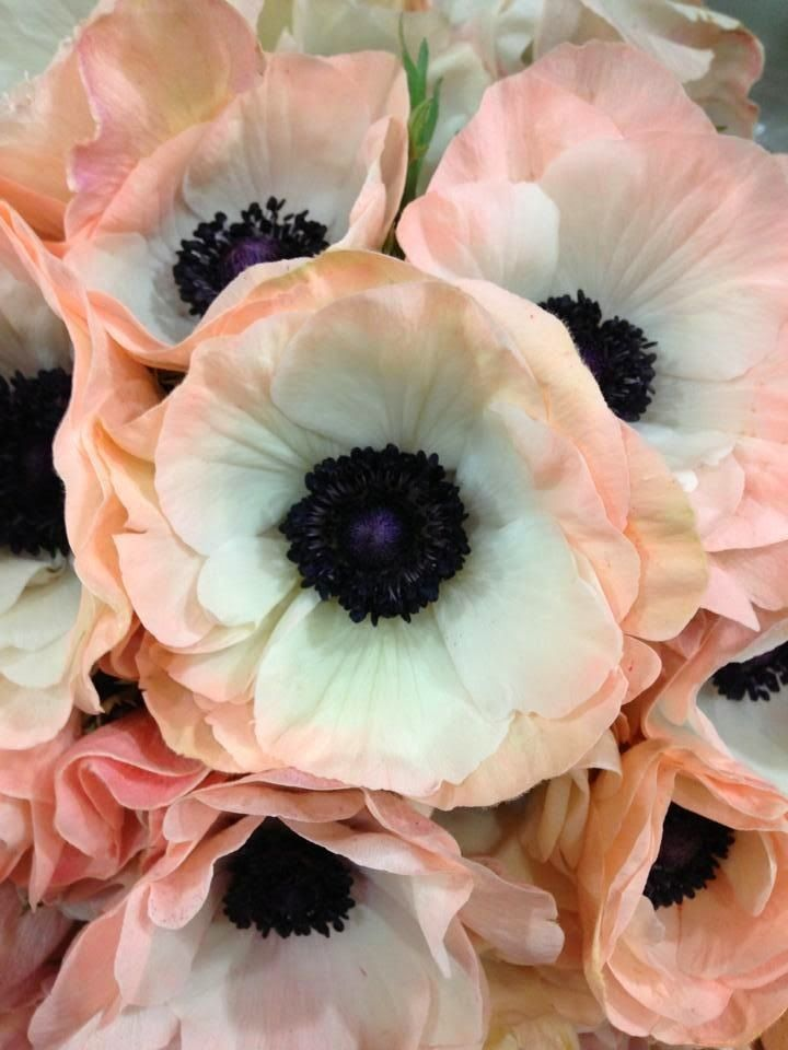 The French Tangerine: ~ anemone love                              …