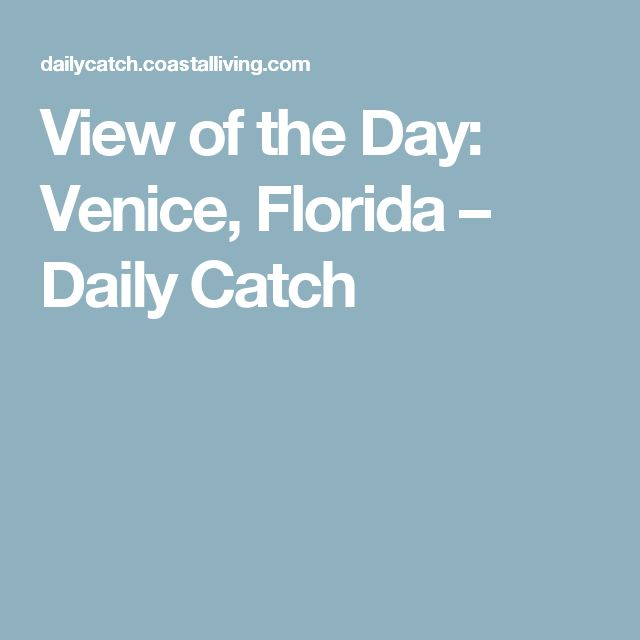 View of the Day: Venice, Florida – Daily Catch
