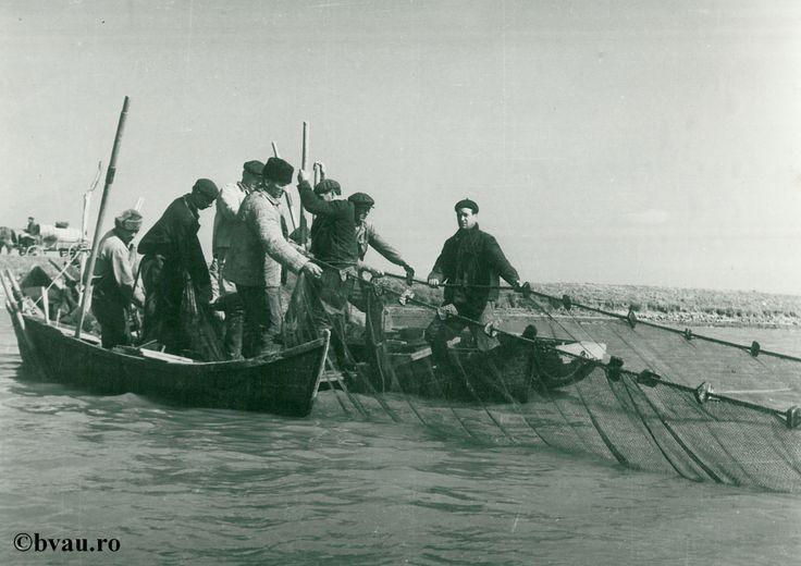 """Primul pescuit în noua crescătorie a IAS Bădălan, Galati, Romania. Imagine din colecțiile Bibliotecii Județene """"V.A. Urechia"""" Galați."""