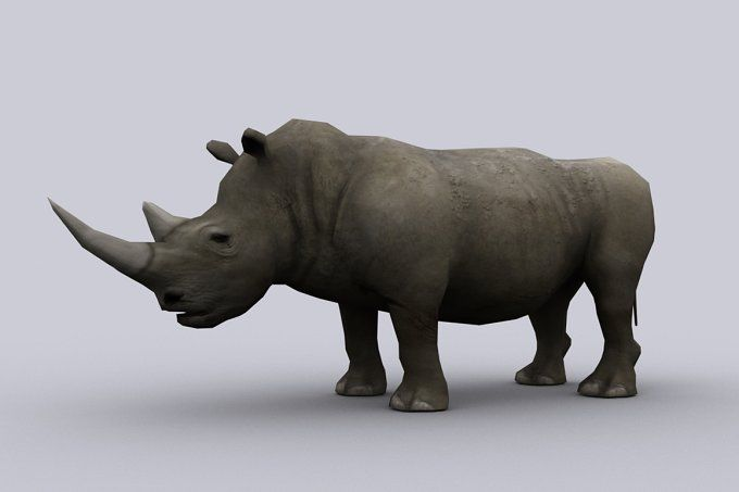 RHINOCEROS fbx only by PROTOFACTOR  on @creativemarket