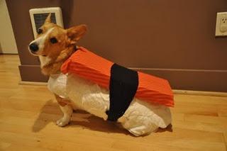 My best DIY doggy halloween costume